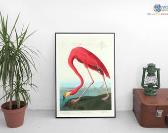 John Audubon Flamingo Poster / Print / Art - Vintage Flamingo Print