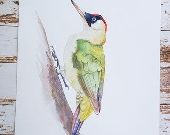 ORIGINAL watercolor PAINTING of a green woodpecker.