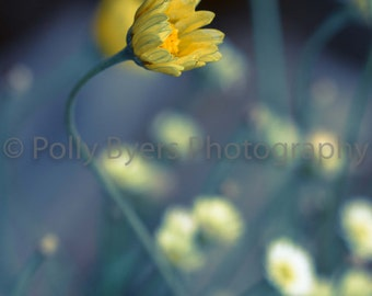 Bending Towards the Light Nature Art Photography