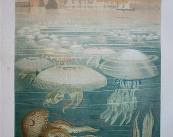 old print jellyfish 1895 03