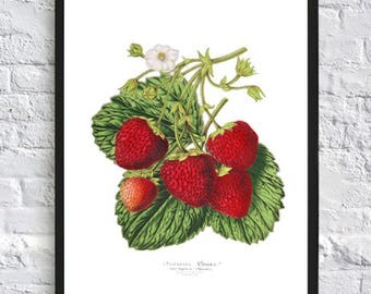 Strawberry Print Berry Botanical Print Illustrations Boho Print Vintage Antique Print Wall Art Print Kitchen Decor