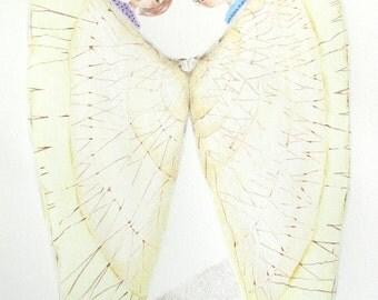 Seashell wall art, original color pencil drawing