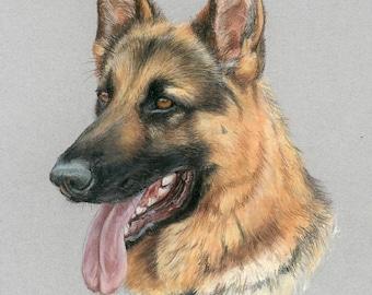 Dog Portrait - custom pet portrait, dog portrait, horse portrait, pastel painting, german shepherd, GSD portrait, pastel portrait.