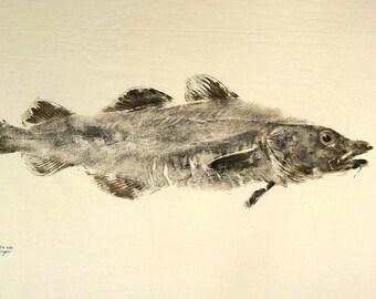 GYOTAKU fish Rubbing Atlantic Cod 8.5 X 11 Fisherman Gift quality salt Water Art Print by artist Barry Singer