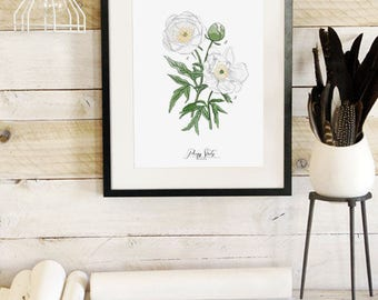 Peony Study -White- Botanic Collection - Beautifully textured cotton canvas art print. Order as a 5x7 8x10 11x14 or 16x20 size.