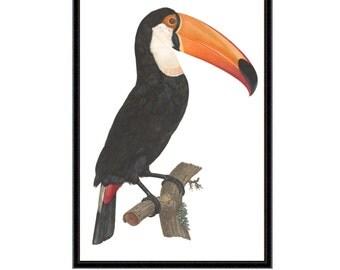 Toucan art print | Toucan print | toucan wall decor | bird art | bird print | bird illustration | toucan bird print | nursery decor | giclee