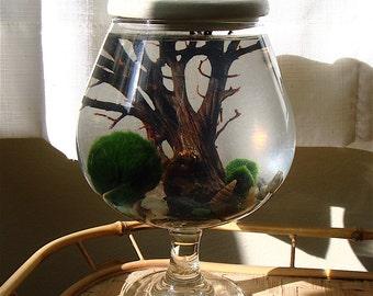 Marimo Moss Ball. Stone Top. Opalite. Goblet. Unique. Zen. Ecosphere.Terrarium