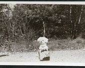 Cute White PUPPY DOG Patiently Sits In PAIL Waiting To Have His Picture Taken Photo Circa 1950s