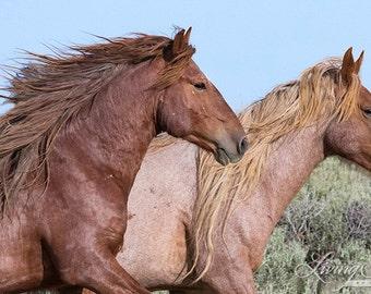 Adobe Manes - Fine Art Wild Horse Photograph - Wild Horse - Adobe Town - Fine Art Print - Iconic Wild Horse