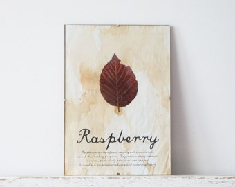 Pressed Leaf- Raspberry Leaf in Frame (1)