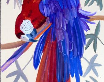 Macaw Preening