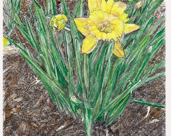 Daffodils Watercolor Print, Spring Flowers Painting, Floral Art, Yellow Home Decor Wall Picture, Easter Lily, Garden Plants, Jonquils