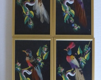 Mexican Feather Art - Exotic Birds On Branches - Set Of Four Small Framed