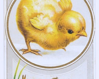Fluffy Chick Easter Postcard, 1912