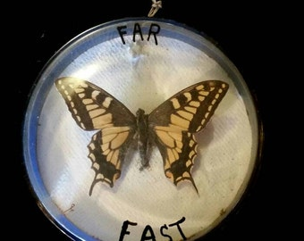 Vintage Butterfly Mount in Specimen Jar