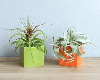 air plant pot etsy. Black Bedroom Furniture Sets. Home Design Ideas