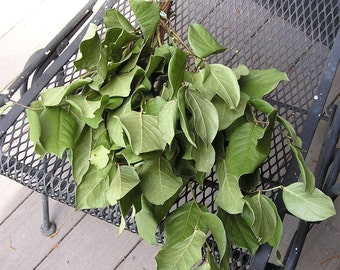 Dried bunch  of Salal Leaf, Dried Greenery, Wreath Greenery, DIY Dried Flowers and Greenery, Country Bunch, Long Lasting Greenery