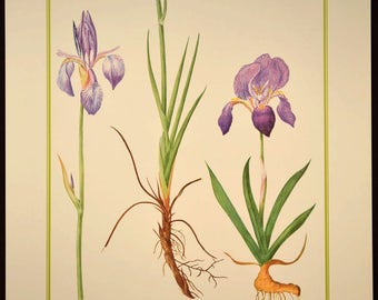 Iris Print Purple Flower Print Nature Wall Art Irises