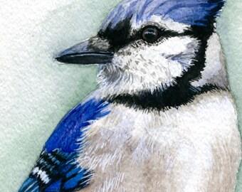 Blue Jay Painting, Blue Jay Art, Bird Art, Watercolor Painting, 7x5