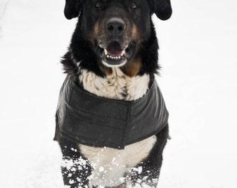 Dog raincoat for big dog.