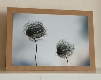 Greetings card: Windswept.