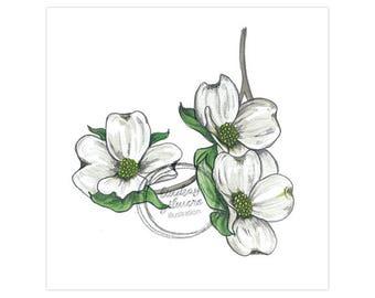 State Flowers: Dogwood (North Carolina, Virginia) print