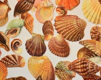 Shell, seashell cut-outs for collage / decoupage / scrapbooking / altered art / paper craft / junk journal /smashbooks