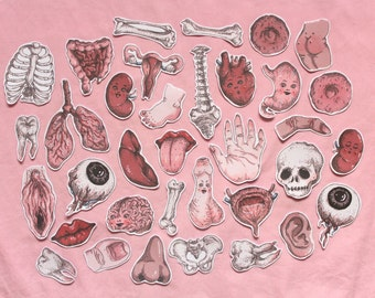 anatomy sticker set ~ 35 pack