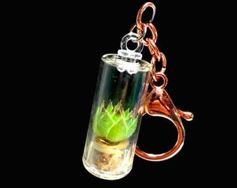 Live Succulent Keychain / Terrarium Keychain / Miniature Terrarium / Keychain Plants / Tiny Terrarium
