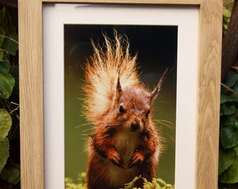 Red Squirrel A4 Framed Print