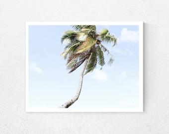 Palm tree print, tropical print, tropical leaf, beach photography, nature print, tropical wall decor, tropical wall art, tropical poster