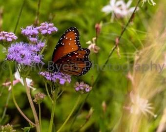 Butterfly Landing Nature Art Photography