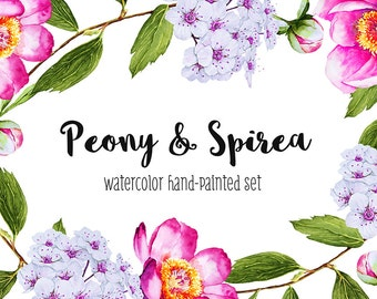 Peony watercolor clip art, Flower illustration, Watercolor bundle, Peony clip art, Peony pattern, Clipart, Digital, Peony Decoration, Spirea