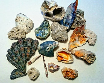 Rare Beach Finds -Hand Collected, fossil shells, beach fossils, beach oddities, sea barnacles, shell pieces, jewelry supplies, curiosities