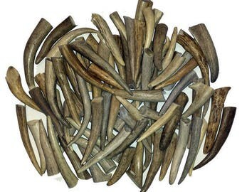 "24 Pack - Deer Antler Tips, Tines, Points - Med. Size 2.5"" To 4"" Long. GRADE A"