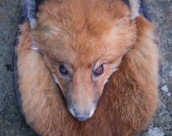 Vulpes vulpes Fox Full Mask Sporran / Ladies Bag