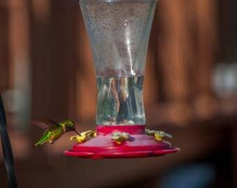 Prints - Hummingbird on Feeder