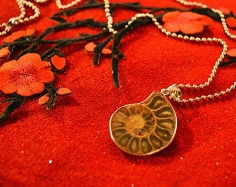 Necklaces Pendants Natural Fossil