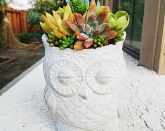 Detailed gorgeous  gray clay owl lover planter  pot with succulent arrangement