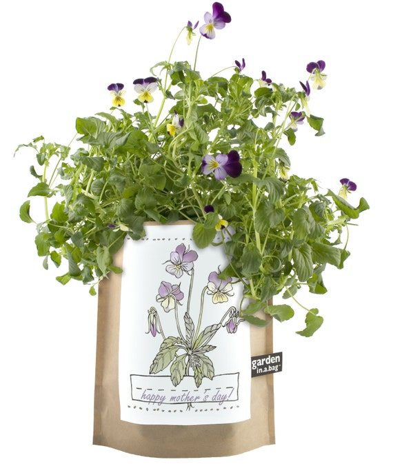 Kids viola garden in a bag grow kit eco friendly for Indoor gardening kit green toys