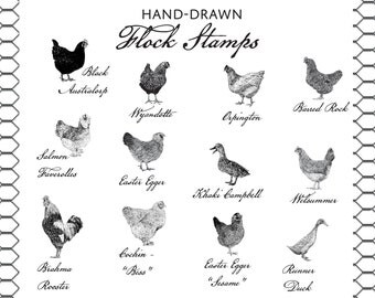 Flock Stamps - Hand Drawn Intricate Stamps of Chickens, Ducks and Geese - Ducks, Hens, Drakes - Farm & Livestock Branding Stamps