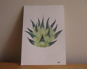 Succulent Watercolour Illustration
