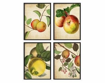 Botanical Print Set Giclee Canvas Art Antique Fruit Prints Wall Art Prints and Posters Illustration Vintage Botanical