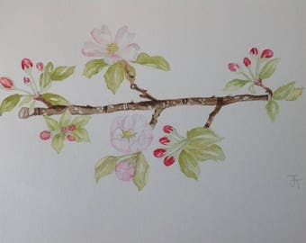 Original Watercolour Painting APPLE BLOSSOM,  Watercolour flowers, Wall Art, Kitchen wall art, Apple blossom painting, Flower painting, OOAK