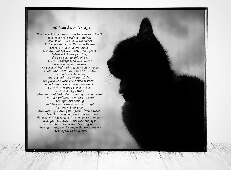 Cat Rainbow Bridge Pictures