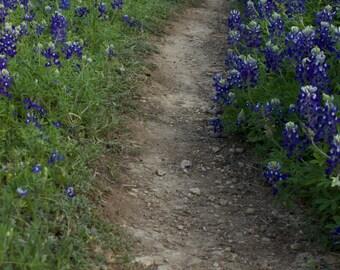 Bluebonnet Path