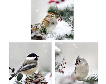 Winter Photography, Winter Birds Photo Set, Set of 3 Wildlife Prints, Nature Photo Set, Wall Art Set, Winter Bird Decor, Christmas Gifts