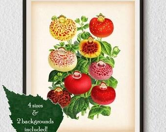 Antique botanical prints, Botanical illustration, Calceolaria, Wall art printable, Botanical art, Vintage prints, Instant download print, #8