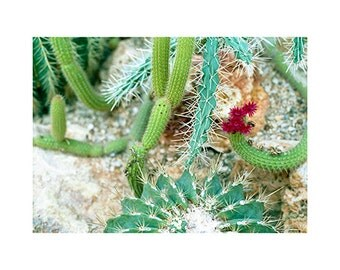 Cactus - Analog Photography - Colors