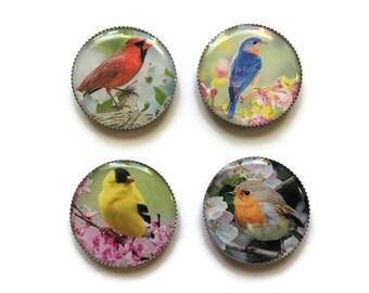 Bird magnets or bird pins, Cardinal, Bluebird, Goldfinch, refrigerator magnets, fridge magnets, office magnets